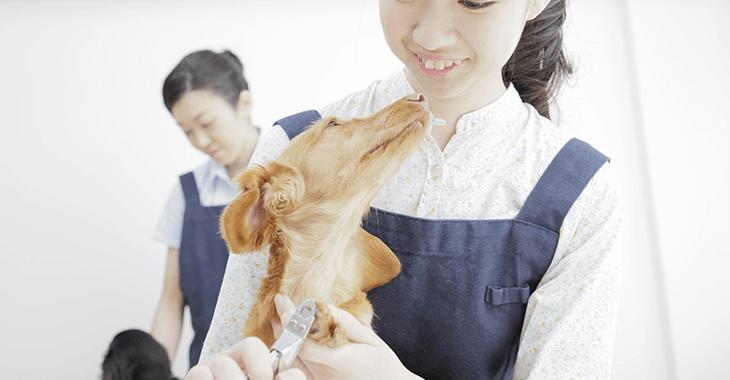 犬をケア中の女性